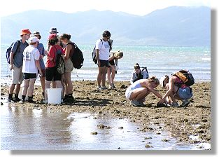Studying the intertidal zone